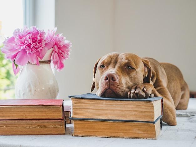 かわいい、愛らしい子犬とビンテージの本。クローズアップ、孤立した背景。ケア、教育、服従訓練、ペットの飼育の概念 Premium写真