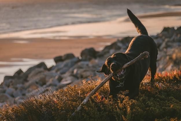 Милая и счастливая собака, жующая палку Бесплатные Фотографии