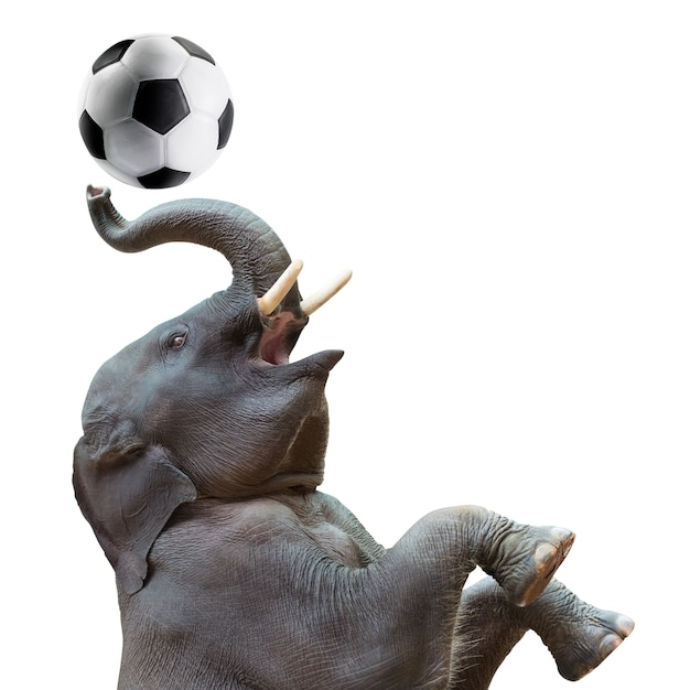 Cute baby asian elephant in action of playing soccer ball isolated on white Premium Photo