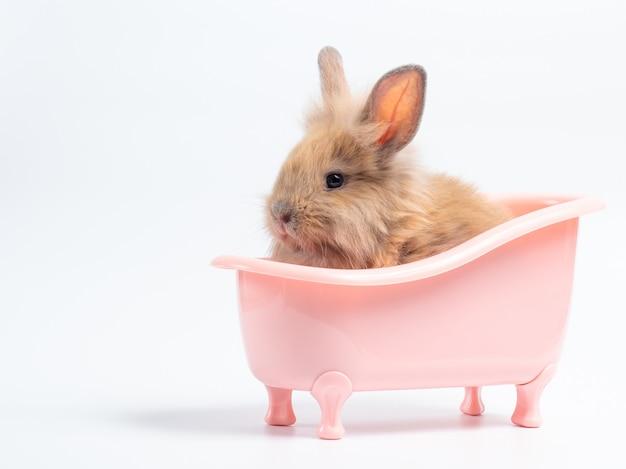 Cute baby brown rabbit in the pink bathtub Premium Photo