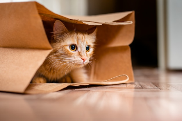 Cute baby kitten sitting inside of brown paper grocery sack Premium Photo