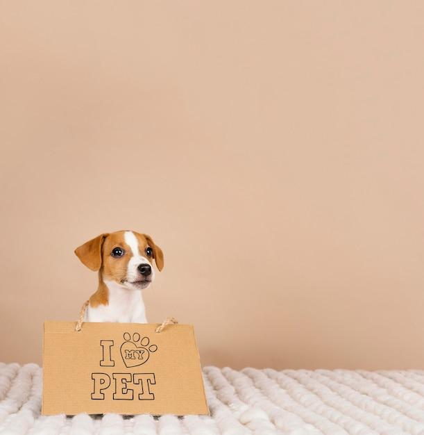 バナーを身に着けているかわいいビーグル犬 無料写真