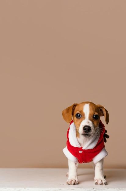 Милый бигль в красном костюме Premium Фотографии