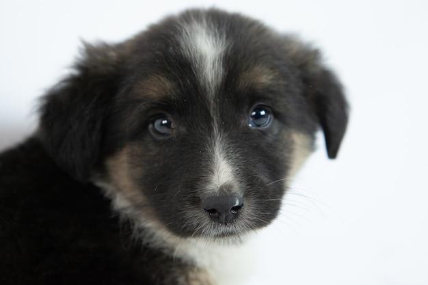 Милый черно-белый щенок Бесплатные Фотографии