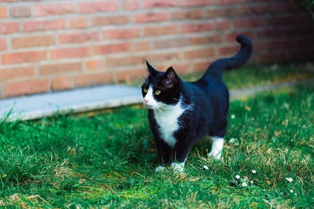 Simpatico gatto nero sull'erba vicino al muro di mattoni rossi Foto Gratuite