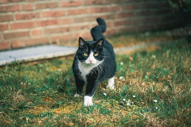 Милый черный кот смотрит в камеру на траве перед стеной Бесплатные Фотографии