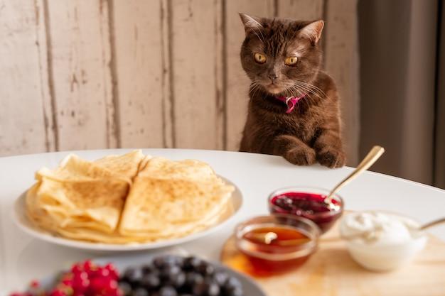 Милый коричневый кот смотрит на аппетитные домашние блины на тарелке со свежими ягодами, джемом, медом и сметаной на столе Premium Фотографии