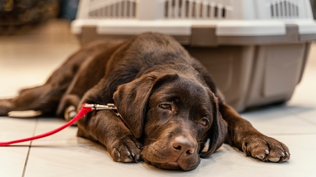 ペットショップでかわいい茶色の犬 無料写真