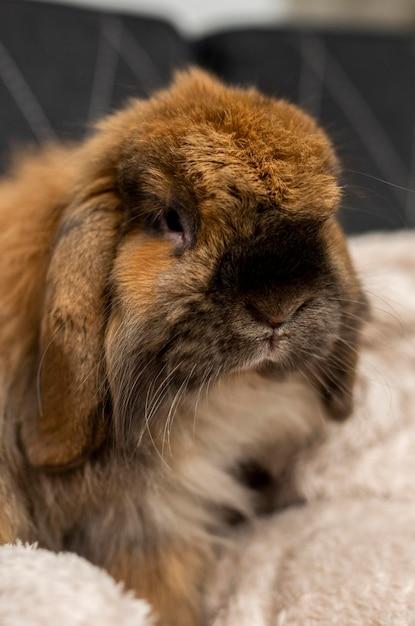 Милый кролик в помещении Бесплатные Фотографии