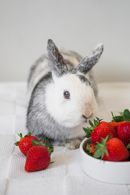 cute bunny rabbit and strawberries on table photo free download