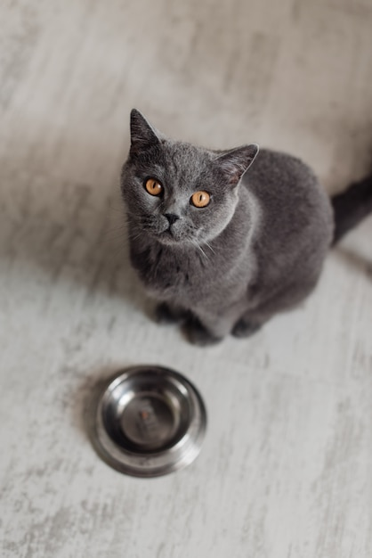 Cute cat lying near bowl with food on floor at home Premium Photo