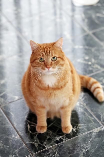 Милый кот на полу Бесплатные Фотографии