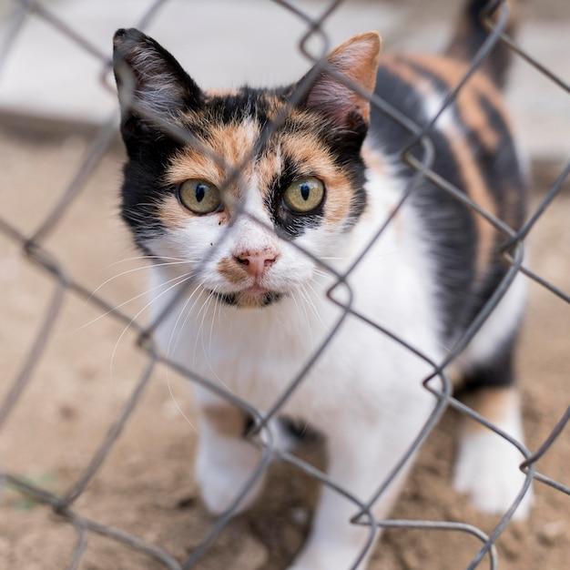 Simpatico gatto all'aperto dietro il recinto Foto Gratuite