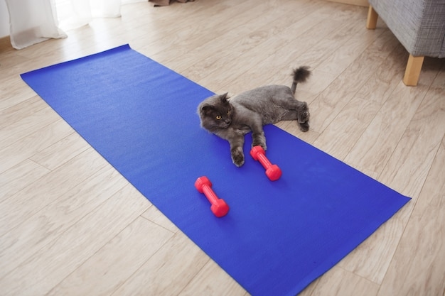 Cute cat playing with fitness dumbbells on floor Free Photo