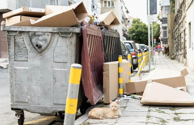 Милый кот сидит рядом с мусорным ведром на открытом воздухе Бесплатные Фотографии