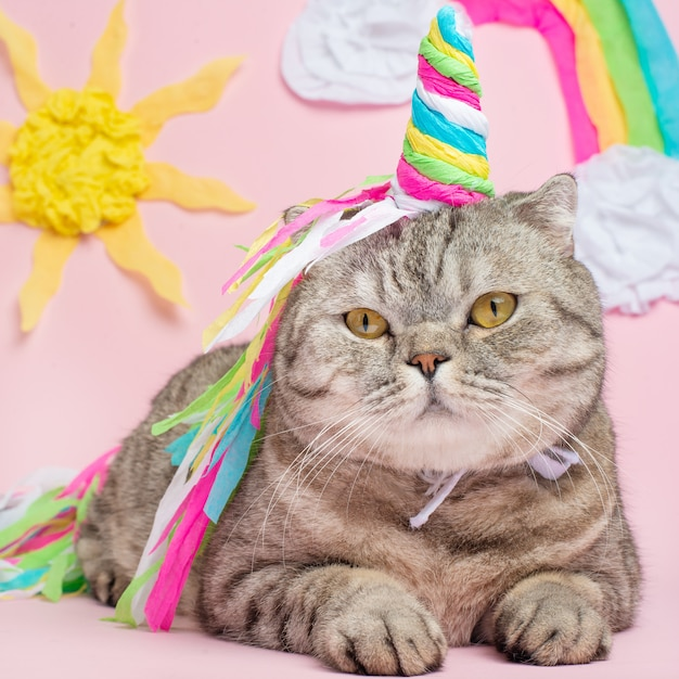 Cute cat unicorn with a rainbow horn on a pink background with sunshine Premium Photo