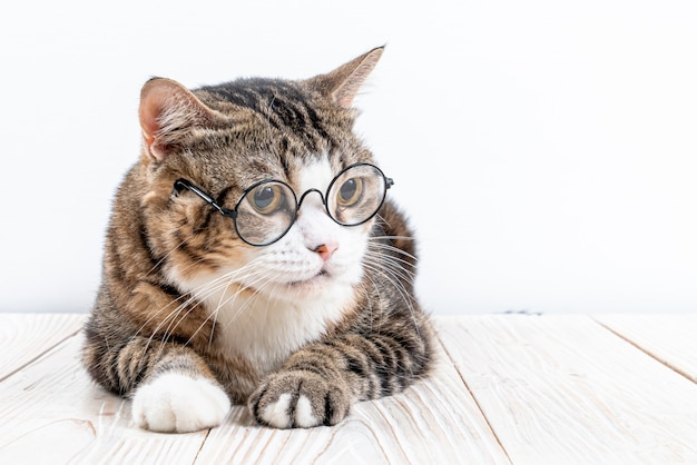 Premium Photo Cute Cat With Glasses Funny Smart Cat
