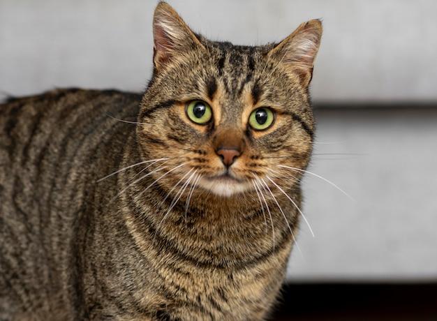 緑の目でかわいい猫 無料写真
