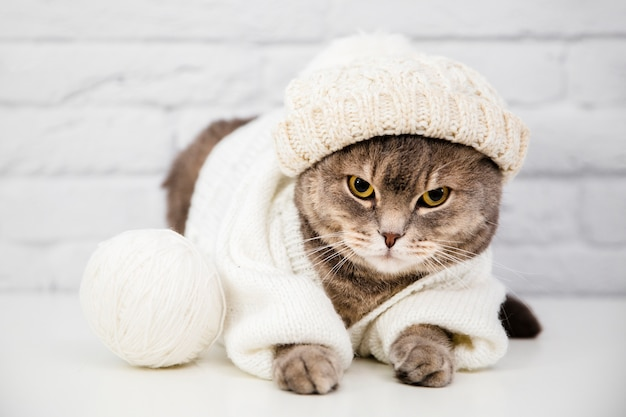 Cute cat with sweater and hat Free Photo