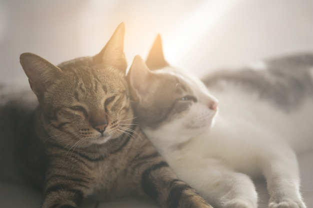 Cute cats are sleeping happily. Premium Photo