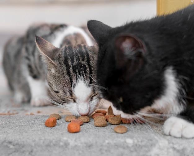 屋外で一緒に食べるかわいい猫 無料写真