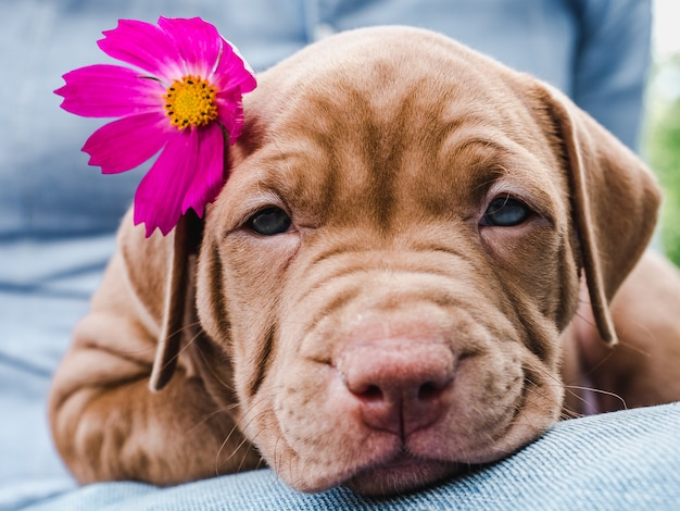Cute, charming puppy and a bright flower Premium Photo