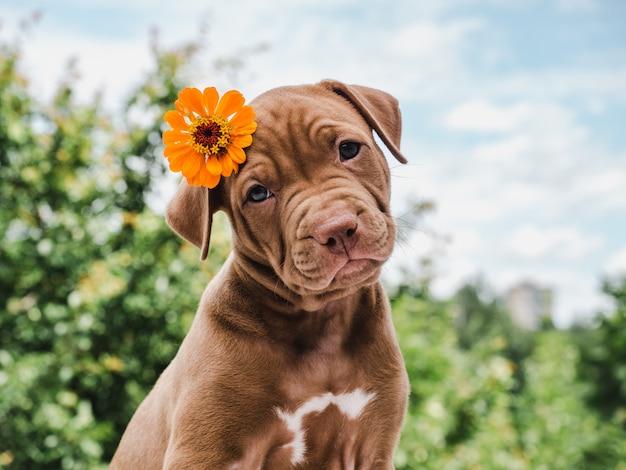 Cute, charming puppy, sitting on a soft rug Premium Photo