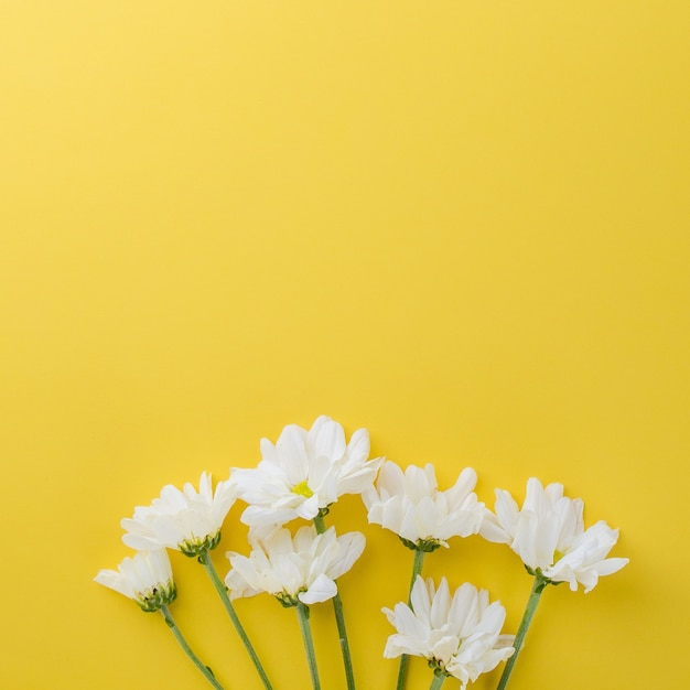 Cute daisy flowers on yellow background with space photo premium cute daisy flowers on yellow background with space premium photo mightylinksfo