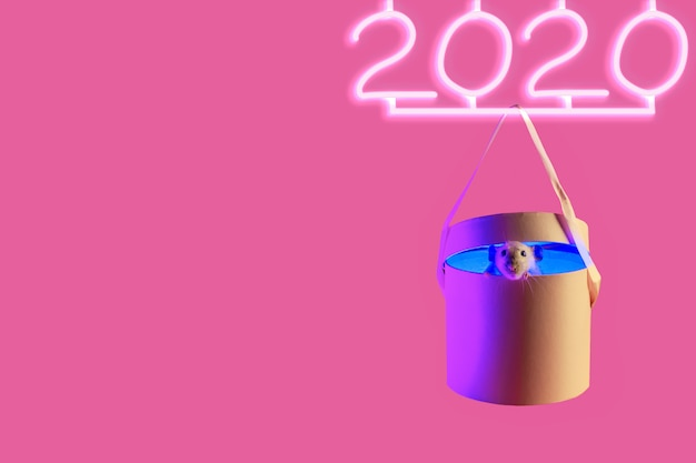 Cute decorative rat in the gift and 2020 neon sign with shadow on pink Premium Photo