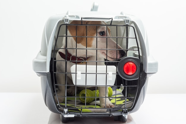 Cute dog in carrier Free Photo