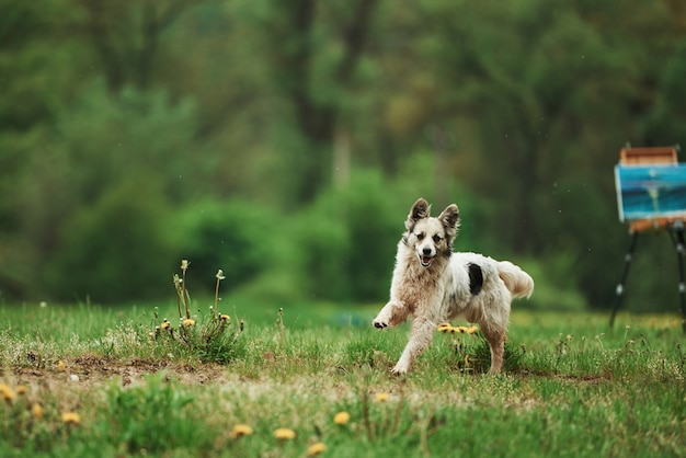 Cute dog enjoying walk at daytime near the forest. paint on easel at background Free Photo