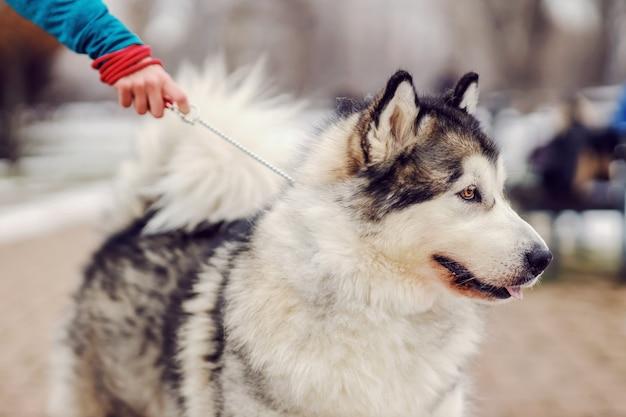 가죽 끈에 귀여운 강아지. 산책에 개. 겨울날 프리미엄 사진