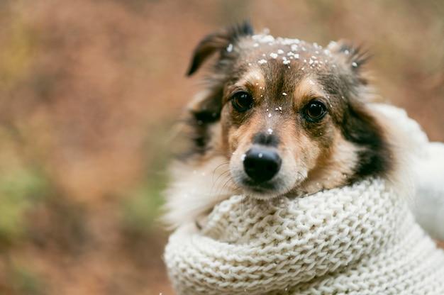 Cane carino fuori con copia spazio Foto Gratuite