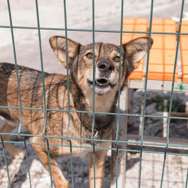 Simpatico cane nel riparo dietro il recinto in attesa di essere adottato Foto Gratuite