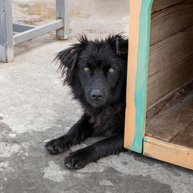 Simpatico cane in rifugio in attesa di essere adottato da qualcuno Foto Gratuite