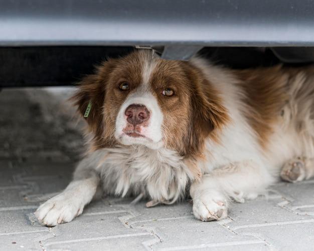 Cane sveglio che si siede sotto la macchina all'aperto Foto Gratuite