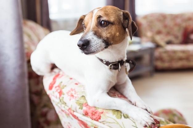 肘掛け椅子に座っているかわいい犬 Premium写真