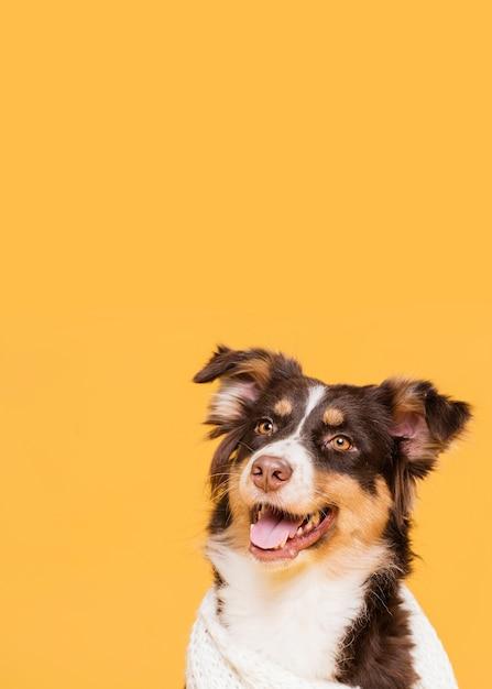 Cute dog in a towel Free Photo