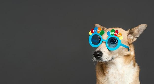 青い眼鏡をかけているかわいい犬 無料写真