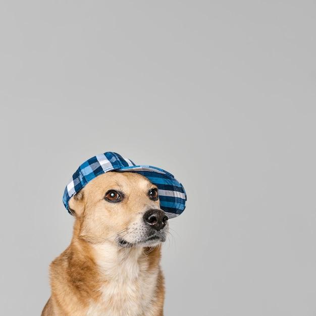 Милая собака в шляпе Бесплатные Фотографии