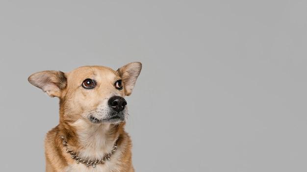 Милая собака в ожерелье с копией пространства Бесплатные Фотографии