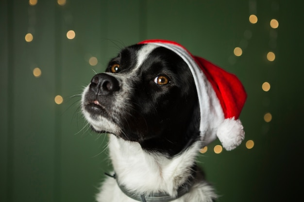 Cute dog wearing santa's red hat Free Photo