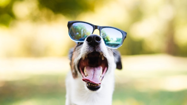 Cute dog wearing sunglasses in park Free Photo