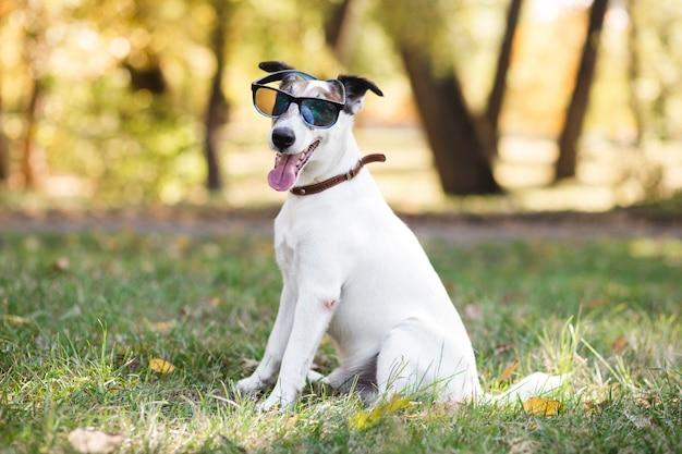 Cute dog wearing sunglasses sitting Free Photo