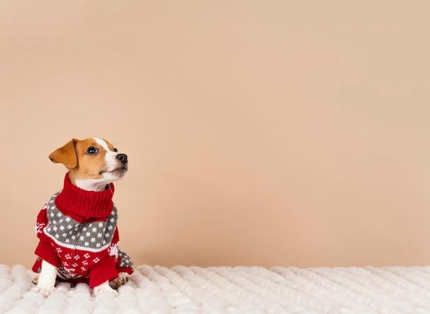 セーターを着ているかわいい犬 無料写真