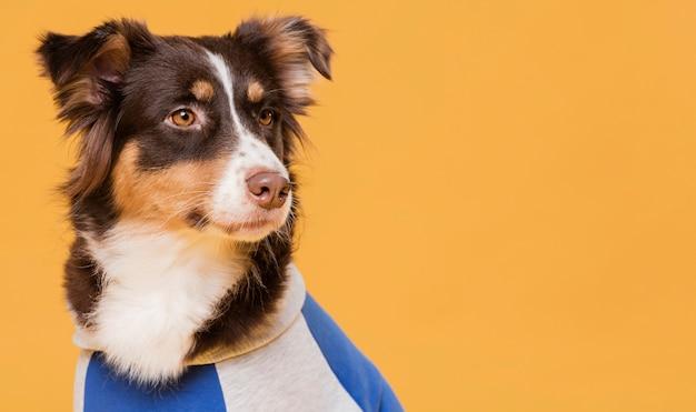 Милая собака с костюмом Premium Фотографии
