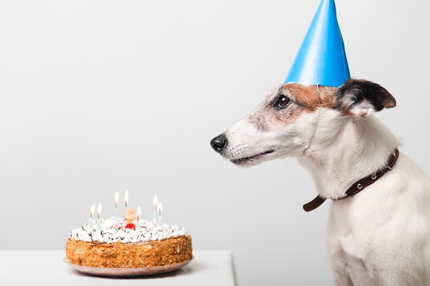 Pleasing Cute Dog With Birthday Cake And Candles Free Photo Personalised Birthday Cards Paralily Jamesorg