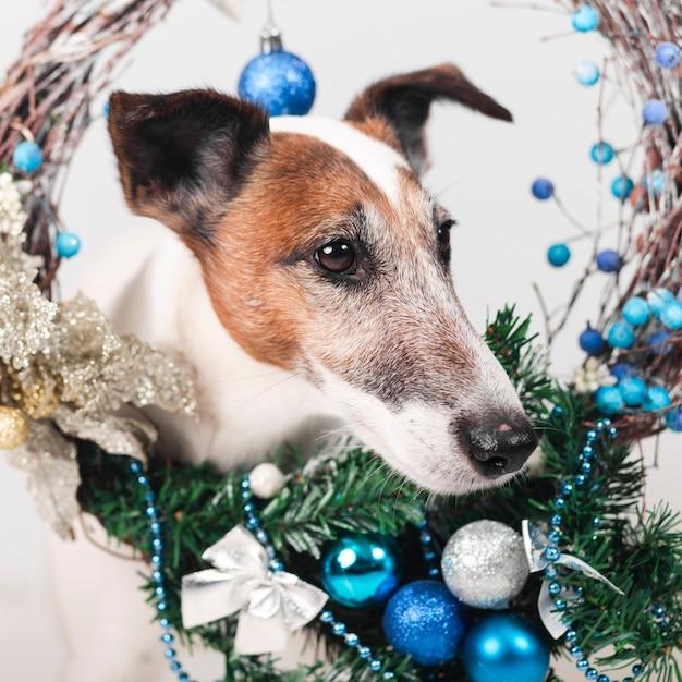 Милая собака с рождественские украшения Бесплатные Фотографии