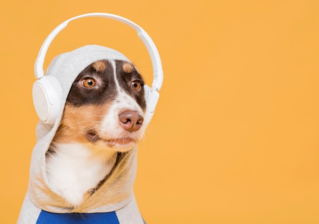 Cute dog with a costume Free Photo