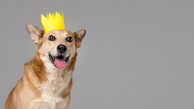 Милая собака с короной и копией пространства Бесплатные Фотографии